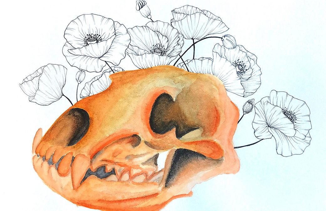 Sachzeichnen / Anatomie